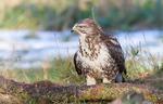 Auswirkung der Windkraft auf geschützte Vogelarten laut Studie weiter unklar