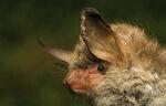 Technische Neuheit: ABO Wind bringt Fledermausdaten in die Cloud
