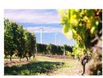Genossenschaft betreibt mit ABO Invest Windparks in Rheinhessen