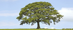 UmweltBank: Umweltkredite überschreiten 2-Millarden-Euro-Marke