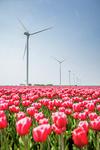 UK: Wind farm targets green power in 2017