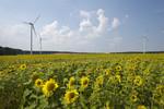 Eckpunkte zu Ausschreibungsregeln für Windkraft an Land veröffentlicht