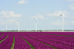 Senvion announces framework agreement for up to 216 MW in Portugal