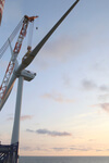 First of kind bird study at offshore wind farm