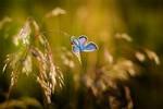 Einfluss der Windenergie auf das weltweite Insektensterben zu vernachlässigen
