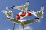 Electricity Transformation Canada: Deutsche Messe veranstaltet neue Energiemesse in Kanada
