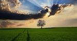 Schulze: Natur liefert häufig die besten Lösungen im Kampf gegen den Klimawandel