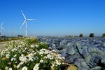 Wind is not growing fast enough for EU economy to go climate-neutral