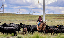 """Wind Is Power"" photo contest  Rancher Russ Stingley moves cattle that graze at Wild Horse to another pasture. Photo credit: Jennifer Diaz, Puget Sound Energy."
