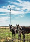 Siemens erhält Auftrag für kanadisches Windkraftwerk Grand Bend