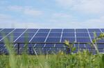 Photovoltaik: Verzerrter Wettbewerb bei erster grenzüberschreitender Ausschreibung