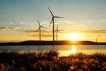 Windkraftanlagen helfen den Auerhühnern im Schwarzwald