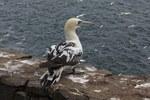 Bird backpacks and attack-proof sensors could help transform understanding of avian life