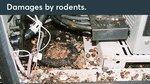 Verwenden Sie Roxtec-Einführungsdichtungen für die Tierabwehr