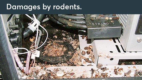 Schäden durch Nager (Bilder: Roxtec)