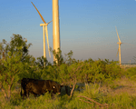 Tri Global Energy 'Hales' Next Step In Wind Project