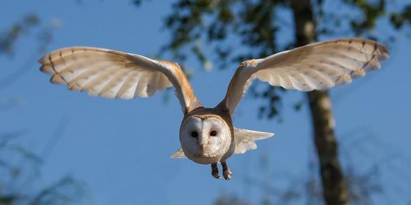 """Den Flügel von Vögeln abgeschaut sind die Flügel von Windenergieanlagen jetzt standardmässig """"gefiedert, sprich mit Kämmen versehen (Bild: Pixaybay)"""
