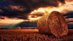 NABU zu 100 Tage GroKo: Durchwachsene Öko-Bilanz
