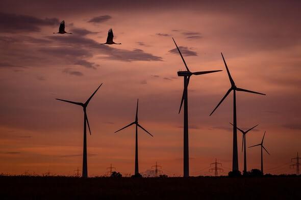 Windenergie und Vogelschutz gehören mittlerweile zusammen (Bild: Pixabay)