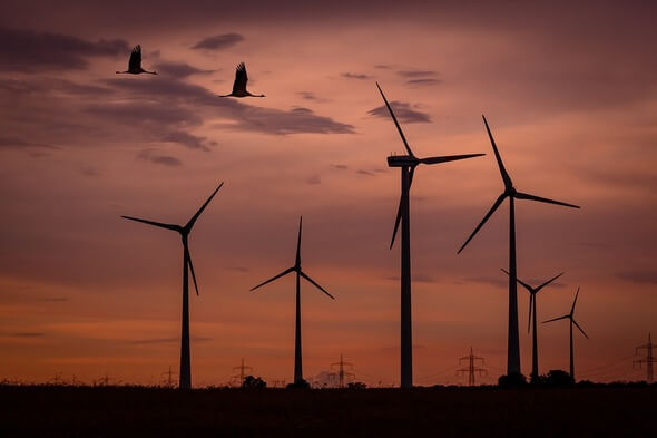 Wind energy and bird protection now belong together (Image: Pixabay)