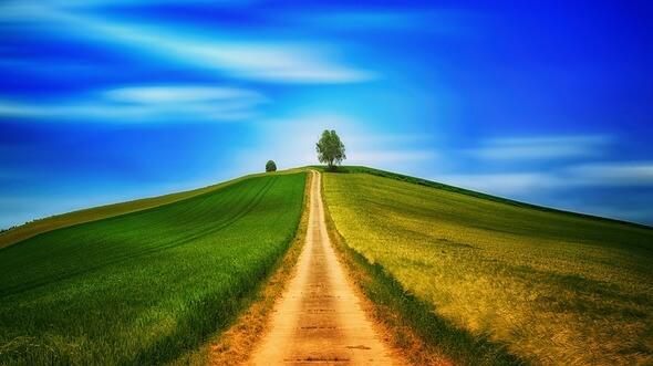 Baum: Pixabay