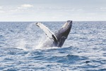 New Initiative Launched to Help Study Whales in U.S. Waters