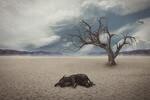 Weltbiodiversitätsrat: Weltweiter Verlust von Arten bedroht unsere Lebensgrundlagen