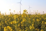 Umwelt-, Windenergie- und Gutachterverbände legen Kriterien für gute Artenschutzgutachten vor