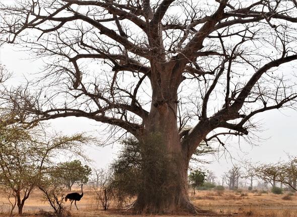 Außerhalb der Städte haben viele Menschen auf dem afrikanischen Kontinent noch immer keinen Zugang zu Strom (Bild: Pixabay)