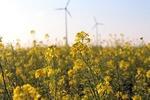 Einheitliche Standards für Genehmigung von Windkraftanlagen