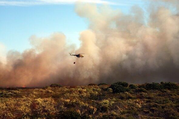 Die Buschbrände zu Jahresbeginn hatten katastrophale Auswirkungen (Bild: Pixabay)