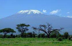 Detail_kilimanjaro_1