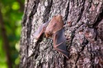 Natural Power launches DARC bat curtailment: creating harmony between wind energy and bats