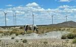 BWTS GmbH unterstützt Windparks in Argentinien