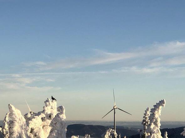 Birkwild auf vereister Baumspitze, im Hintergrund ein Windrad im Windpark Pretul (Bild: ÖBf-Archiv/P. Zelinka)