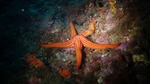 Ocean Infinity acquires MMT