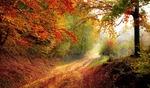 Grünes Licht für Windkraft im Wald