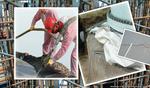 Haus der Technik e.V.: Untragbar! – Schäden an Tragstrukturen von WEA